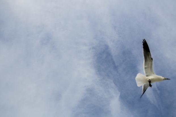 Overhead.